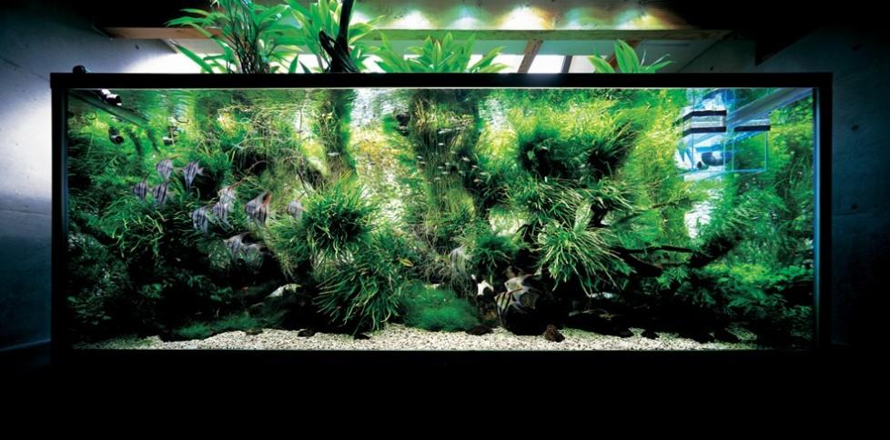 domácí akvária fotografie