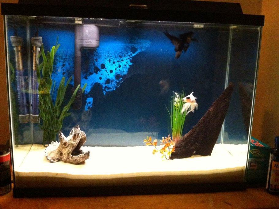 akvária na rybičky