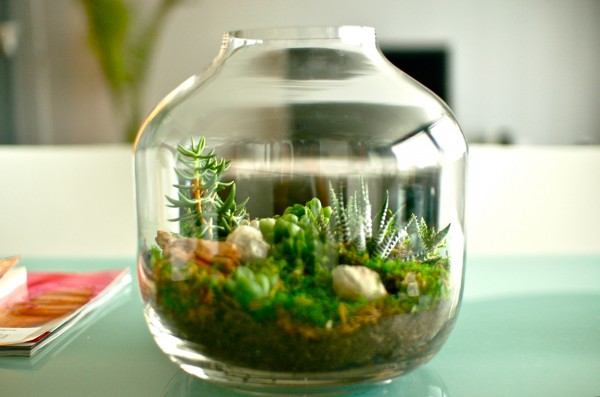 cacti-and-succulent-microworld-in-glass-600x397