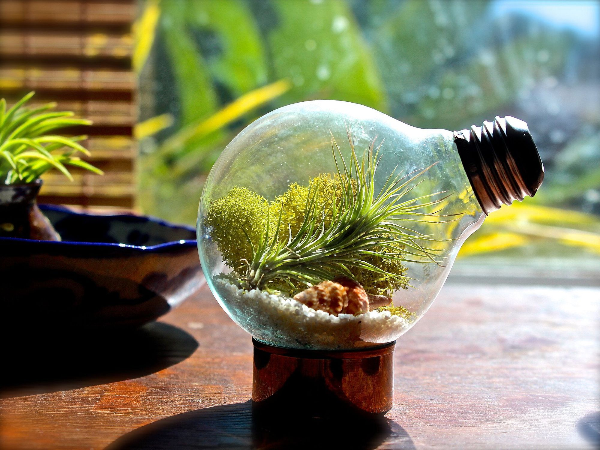 DIY-Light-Bulb-Air-Plant-Terrarium