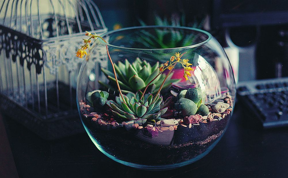 Stunning-DIY-terrarium-idea-for-the-modern-home
