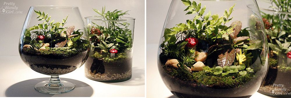 Two-small-glass-terrariums