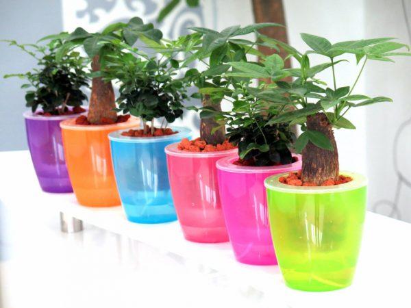 neon-self-watering-planters-600x450