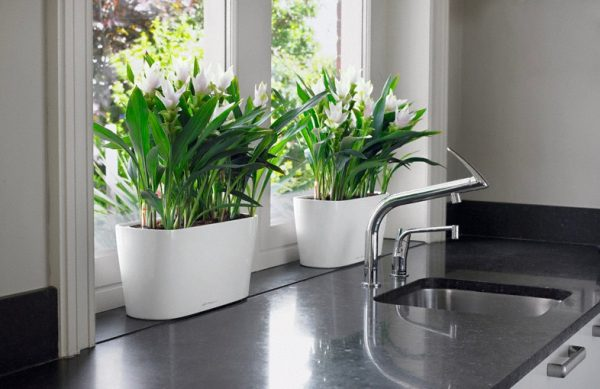 self-watering-planters-for-windows-600x389