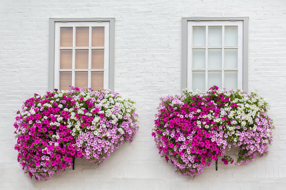 Nejkrásnější balkonovky v ulici